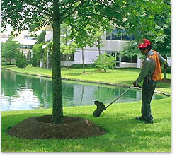 Landscape Maintenance Harris Landscape Inc Commercial